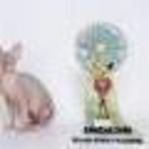 Продается подрощеный котик канадского сфинкса